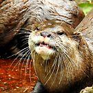 Grinning Otter by Barnbk02
