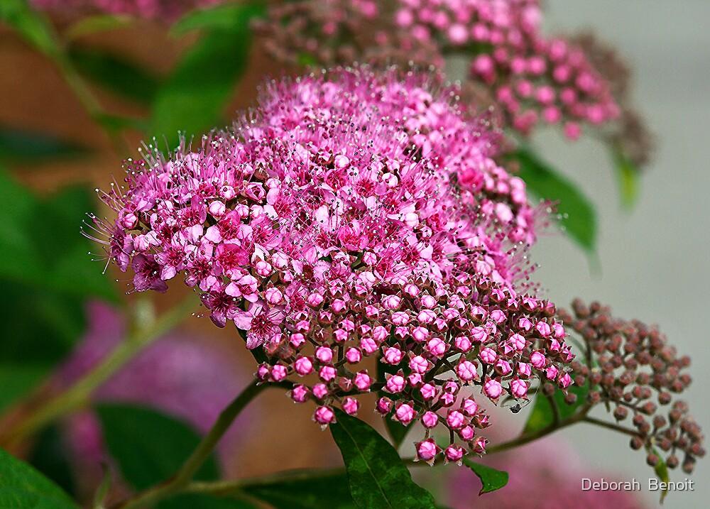 Tiny Pink Flowers by Deborah  Benoit