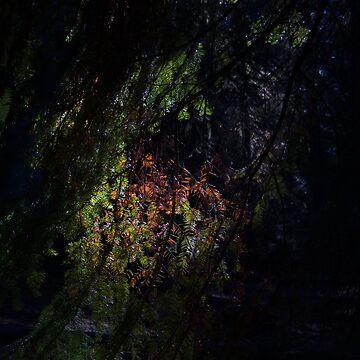 PINE TREE GLOW by juliawaters