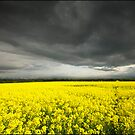 Fields of Gold by Tony Murphy