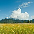 Meadow of Sunflowers and the San Francisco Peaks by Jeff Goulden