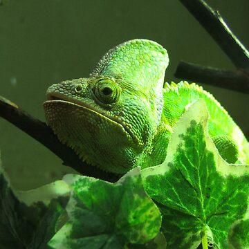 Chameleon by XsCode