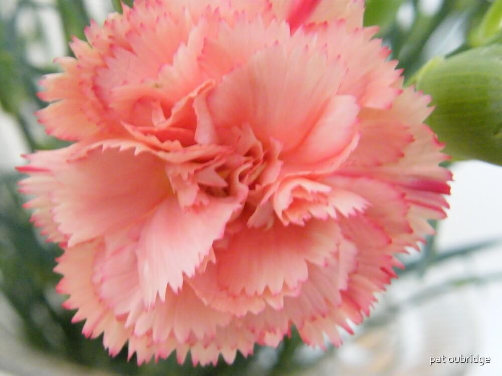 Carnation Bloom 2 by pat oubridge