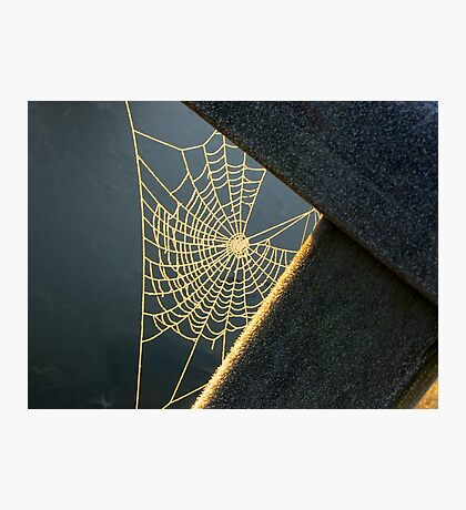 Sunkissed Web Photographic Print