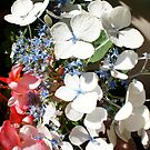 Red, white & blue blooms.  What a treat for 4th of July visitors! 2008 by leih2008
