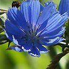 Wildflower 1 by solareclips~Julie  Alexander