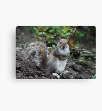 squirrell Canvas Print