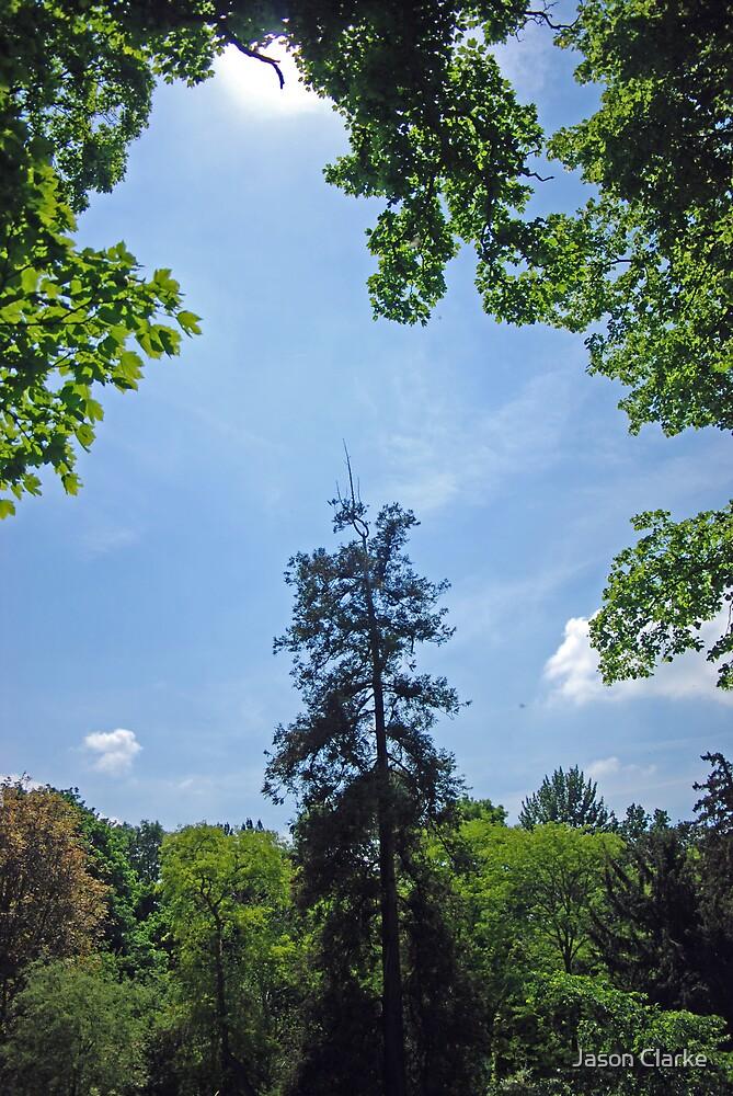 Rockingham Forest by Jason Clarke