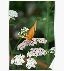 iulia butterfly Poster