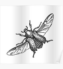 Bugs & Insects - Flying Bug Drawing #10 Poster