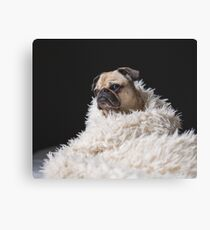 Peggie the Pug iii Canvas Print