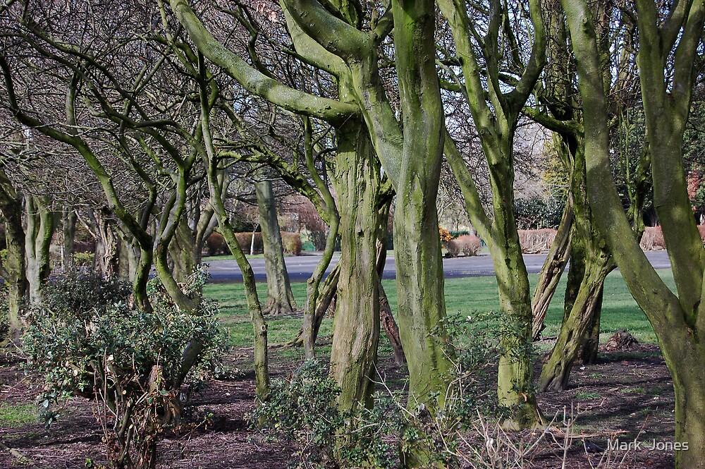 Mossy Wood by Mark  Jones