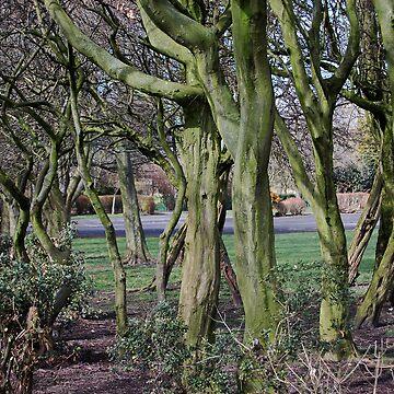 Mossy Wood by MarkJones