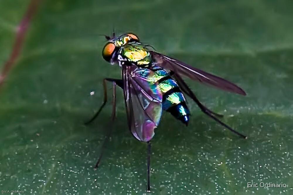 Iridescent  Fly by Eric Ordinario