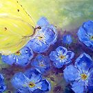 Butterfly on Forget Me Not Flowers by Claudia Hansen