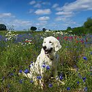 Ditte in a field of wild flowers by Trine