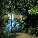 Creek woods by solareclips~Julie  Alexander