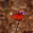 Gulf Fritillary Butterfly by Richard G Witham