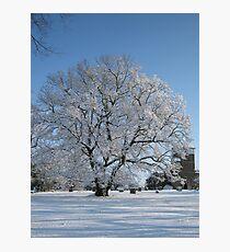 Winter Wonderland In Kent 2009 Photographic Print