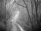 Straying From The Path by Ben Loveday