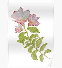 The branch flowering pink wild flower, isolated on white background. Poster