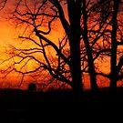 Spectacular Sunrise by FrankieCat