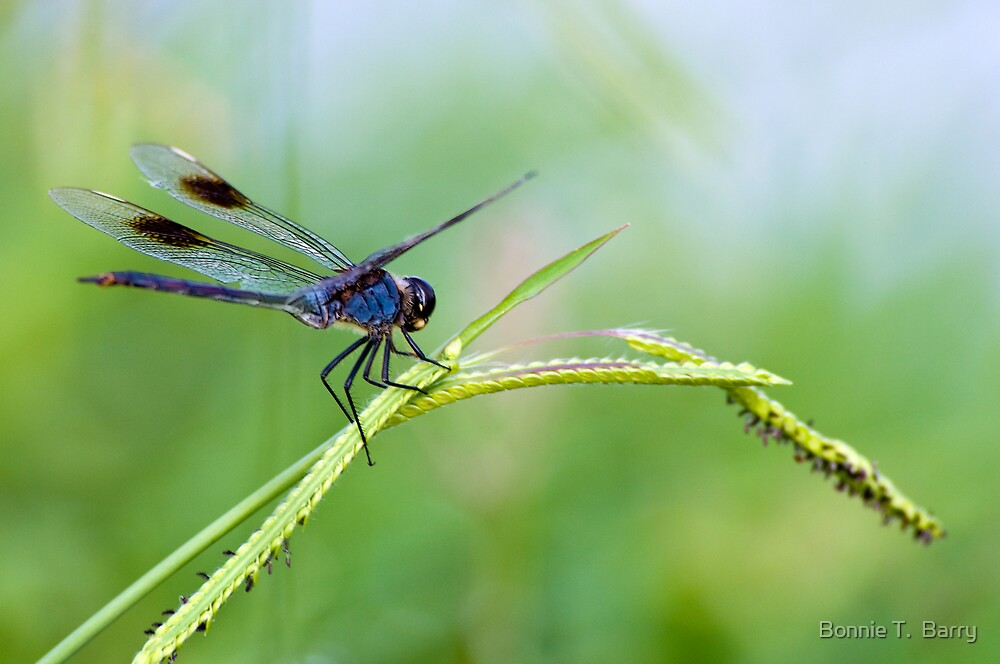 Dragonfly at Lake Martin by Bonnie T.  Barry
