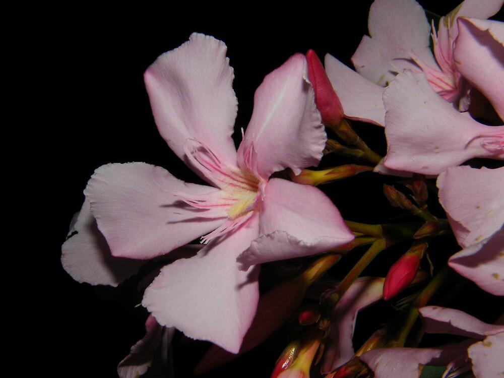 flower by night by Joel Wigley