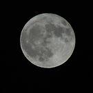 Full Moon by Vonnie Murfin