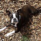 Betty Boop, the dog by WildestArt