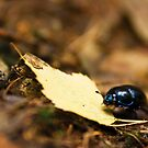 Beetle and his journey by Dominika Aniola