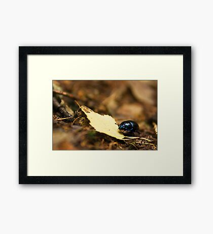 Beetle and his journey Framed Print