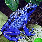 Blue Frog by Lee Kerr