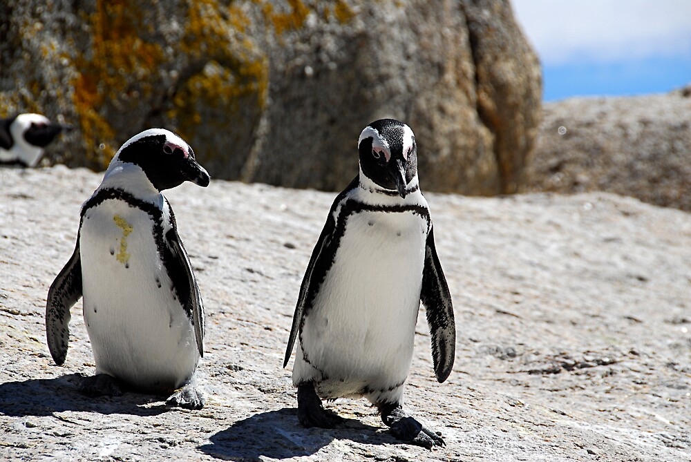 Penguins by lozzo