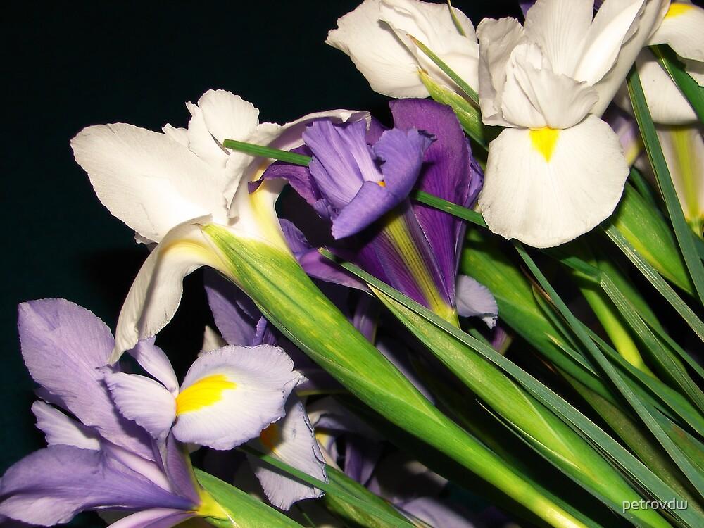 iris 1 by petrovdw
