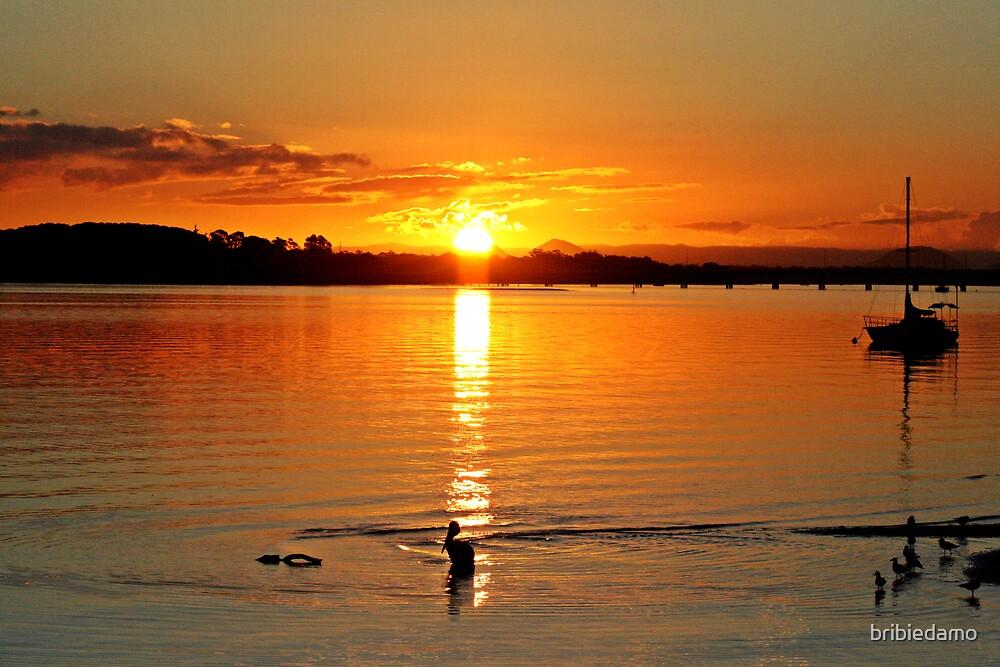 Bongaree Sunset with birds by bribiedamo