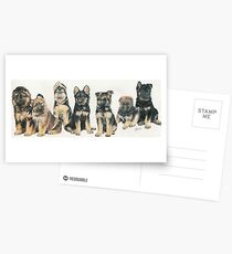 German Shepherd Puppies Postcards