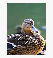 Mrs. Duck Photographic Print