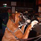 A Boxer having a Pint. by Anya  Cristina