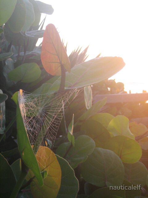 Spider web in soft glow of sunrise by nauticalelf
