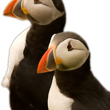 Puffins by jon77lees
