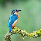 Kingfisher Portrait by M S Photography/Art
