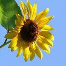 Waving To the Sun :-) Hello Sun! by Heather Friedman