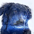 Blue Dog by © Kira Bodensted