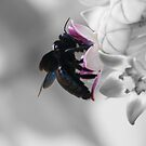 bee seen by RatRace