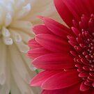 Flowers by Daniel Knights