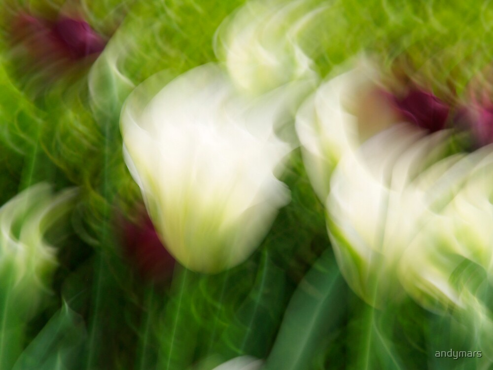 white purple tulips blur by andymars