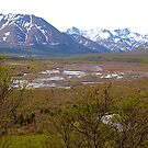 Denali National Park, Wetlands #3, Alaska, 2012. by johnrf