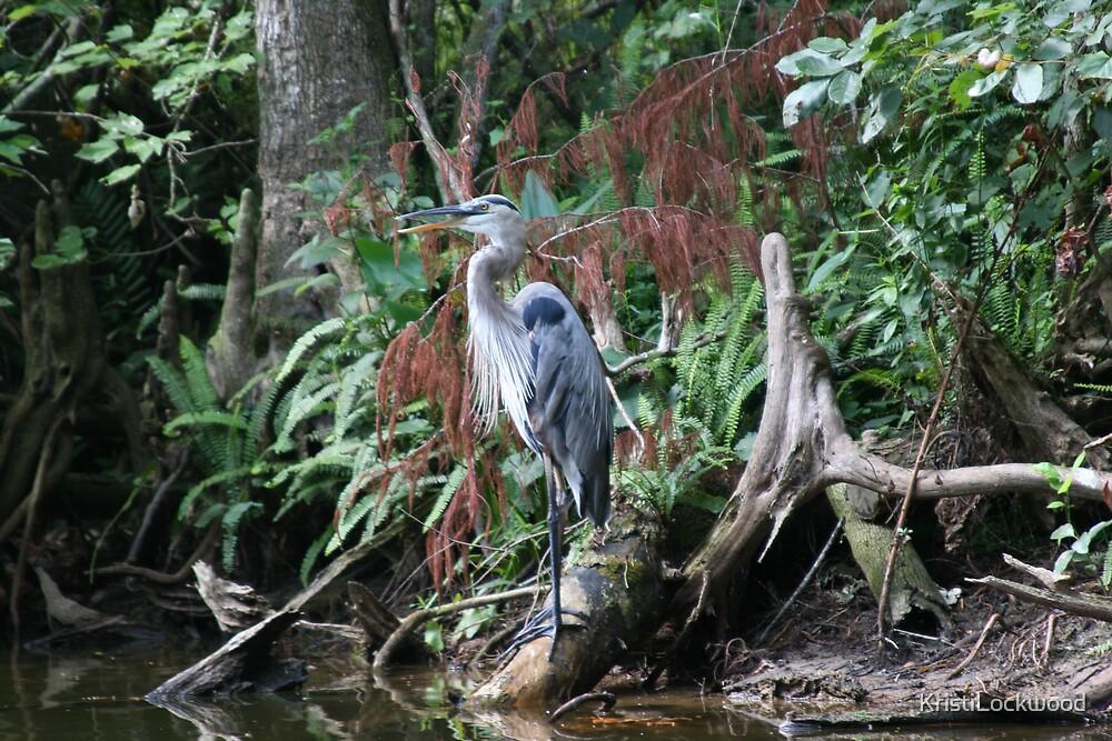 The Great Blue Heron by Kristi Lockwood