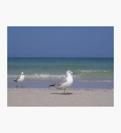 Sharing the Beach Photographic Print